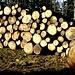 Holz - auch in dieser Form denke ich an den [u Felix]