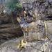 Bizarre Felsbildungen aus Kalk im Jomertobel