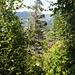 überwucherter Bergweg Heftiboden - Hilferenpass