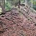 Ein Rippenkamm, der beidseits steil abfällt und stark von frei liegenden Wurzeln geprägt ist: Er ist typisch für viele Routen in der Üetliberg-Ostflanke.
