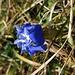 Ende November: viele Blumen blühen noch 2