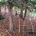 """Auch auf dieses verlassene """"Waldhaus"""" stossen wir bald nach dem Einstieg - dort, wo der Geländerücken nach breit und relativ flach ist."""