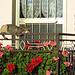 ligurische Katzengemütlichkeit