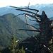 Vom Ölrain auf den Rotwandlkopf, dahinter Karwendel