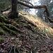 Im oberen Teil lichtet sich der Wald. Grasflächen, wie sie auch die Partien zwischen den Rippen bedecken, werden sichtbar.