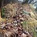 Unverkennbar ein Trampelpfad, wenn auch im Herbst mit viel Laub gefüllt ...