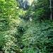Kein Regenwald, sondern Gegend Zettenalp