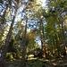 Abstieg durch den felsübersäten Herbstwald.