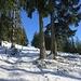 Am eifachsten geht es durch den Schnee auf der Forststrasse.