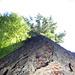 Auf dem Rückweg noch ein Mammut-Baum. Umfang ca. 5m