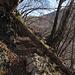 Vielerorts ist der Weg durch umgestürzte Bäume versperrt