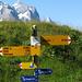 An der Gummenalp (Hintergrund Wetterhorn)