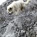 Kletterübungen für den gepflegten Berghund, Kapitel 5.