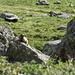 Marmotte dans le Val Lavinuoz, encore une