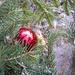 natura e Natale