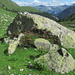 Alpenrosen im Val Mulix