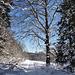 Aus dem Wald in die Weide von Petit Coeurie, wo wir ...