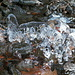 Funghi di ghiaccio