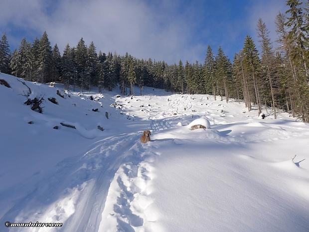 Dadurch, dass der Schnee trägt und die Baumstümpfe schön zu erahnen sind, ist die Abfahrt, relativ, problemlos!