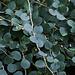 Auf die Kapernpflanze trifft man auf dem Archipel häufig