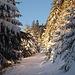 La belle forêt Vosgienne recouverte d'un épais manteau blanc.