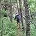 bestimmt Bärengelände - die Wälder am Terbedinskij Chrebet