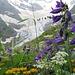das ist Kaukasus: Riesenblumen und Gletscher !!!