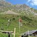 Ein ganzes Rudel kläffender Welpen versüsst den Aufstieg auf die Sinsgäuer Schonegg