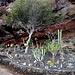 Giardino creato a ridosso della scogliera sulla Playa de La Casa