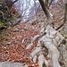 Il canalino iniziale, pieno di foglie. La ripidità non è quella che si vede nella foto.