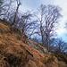 Tipico ambiente di salita, con terreno ripido coperto da paglia. Molto utile la piccozza.