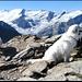 Auf dem Gipfel, Superpanorama. Triftgletscher and friends im Hintergrund.