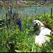 Dunja lacht über einen meiner Witze (auch mit den Tieren muss man reden!).