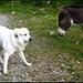 Ein Hund und ein Esel (ausnahmsweise sitzt dieser nicht in Bern!).
