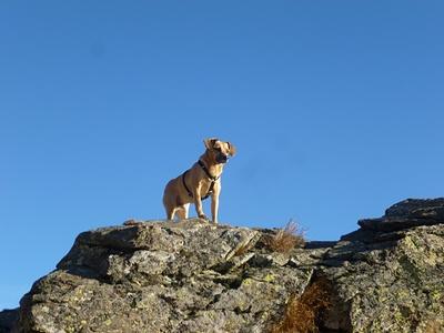 """Olmo:""""Il cane da montagna"""""""