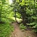 ..und Holzruecken zum Col d'Hahnenbrunnen.