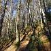 ... in den Wald, mit undeutlichen Spuren, hinauf zur ...