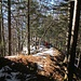 auf einer Strecke von ca. 1 km geht es ungefähr 250 Höhenmeter derart reizvoll dem Grat entlang aufwärts ...