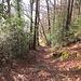 ... zum Austritt aus dem Wald ob Sellen