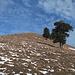 Gipfel des Chli Aubrig: praktisch aper
