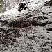 Querung des Trampelpfades Ost: Nach rechts ginge es zum Hohenstein, nach links via das Rossweidli zum Laternenweg (und darüber hinaus zur Bernegg und zur Falletsche). Zum Üetliberg-Grat geht's gerade aus weiter - immer schön obsi.