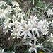 Doch noch ein paar Edelweiss gefunden - wenn auch nur im Blumentrog des Restaurant Alterhaupt