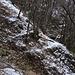 Sul sentiero disegnato dalla neve