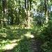 Dschungelpfad. Hier ist er mal schön breit und gut erkennbar. Gemäss meiner Karte ist dieser Weg mit dem PW befahrbar.