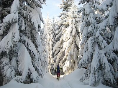 schönes Waldstück