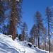 weiter auf schöner Spur durch den Wald