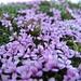 Blumen-Pölsterchen
