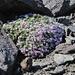 Vegetation in karger Umgebung auf knapp 3100 müM