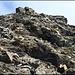 Beim Aufstieg Mattwaldhorn (der andere Hunde lugt ganz rechts aus dem Steinsalat hervor).