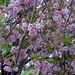Baum voller Blüten